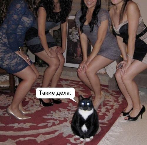 картинки котиков прикольных фото:
