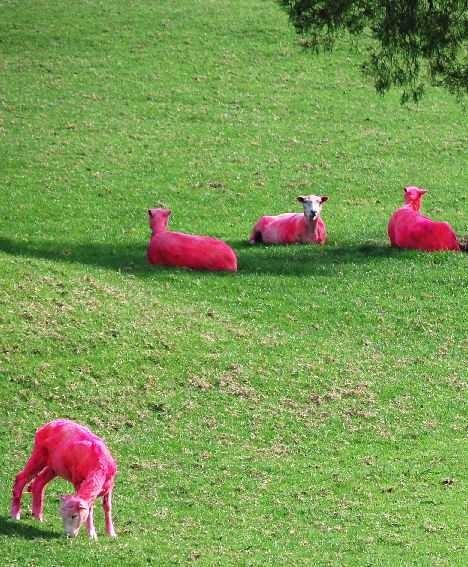 прикольные картинки розовые:
