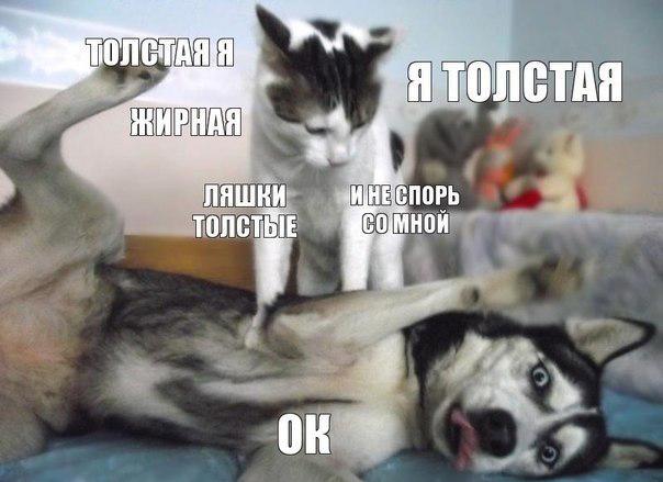Новости онлайн советск кировской
