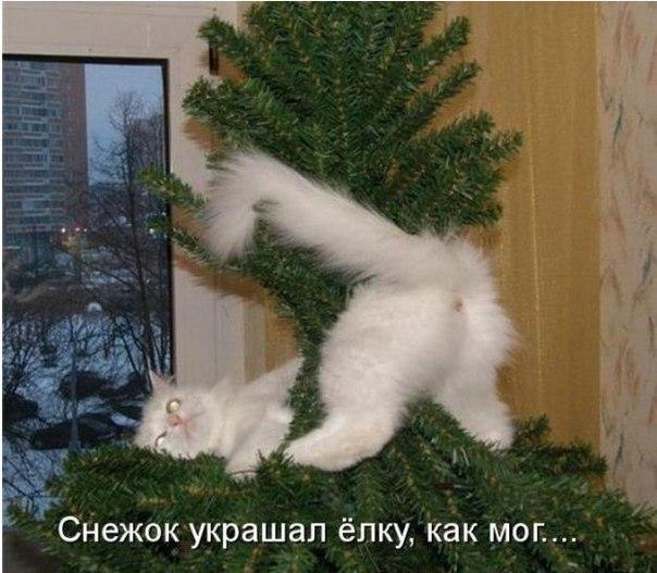 Смешные картинки про кошек с надписями до слёз - 24f