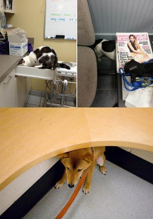 Животнеы на приёме у ветеринара