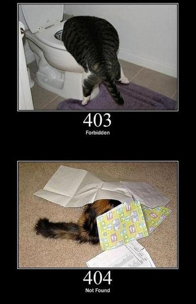 Системные ошибки в виде котэ