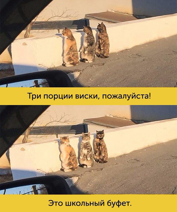 мимика котиков