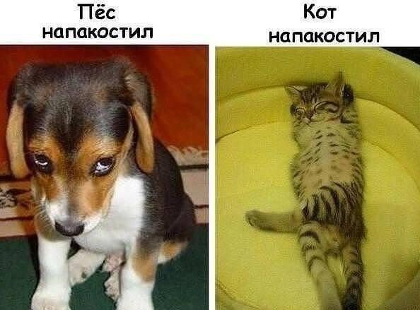 Виноватые котики и собачки