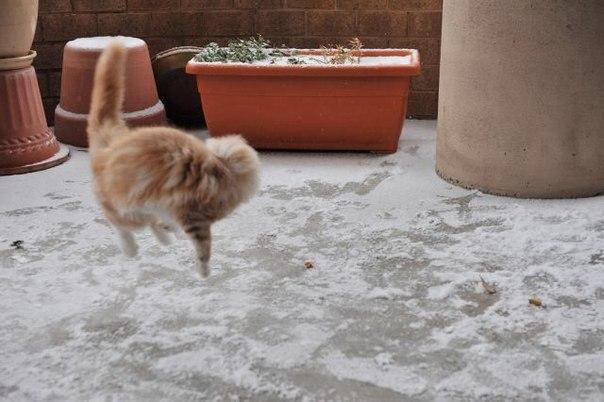 Кота на первый снег в его жизни