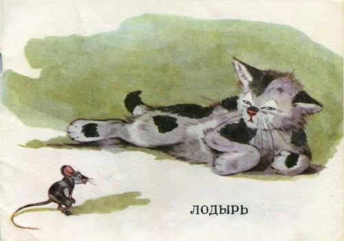 Какие бывают котята