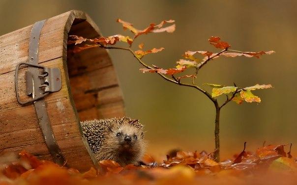 Золотая осень в разных уголках мира