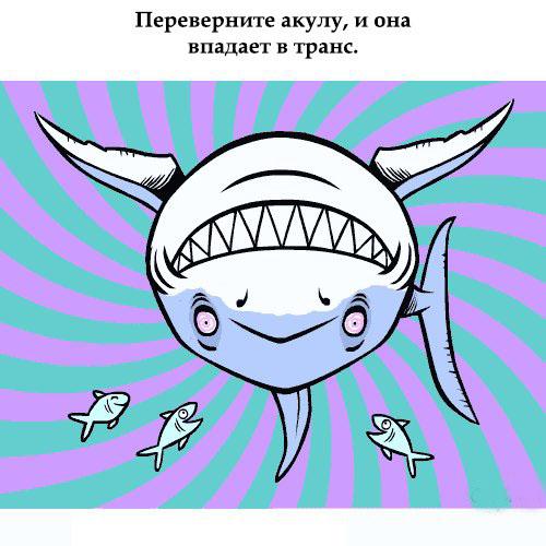 Интересные факты о животных ...: fun.tochka.net/pictures/54361-interesnye-fakty-o-zhivotnykh
