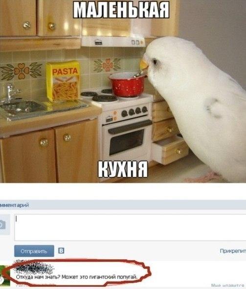 мини приколы: