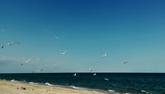 Отдых на море недорого: Арабатская стрелка − уникальное место в Украине