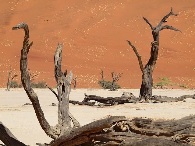 Мертвий ліс в Намібії