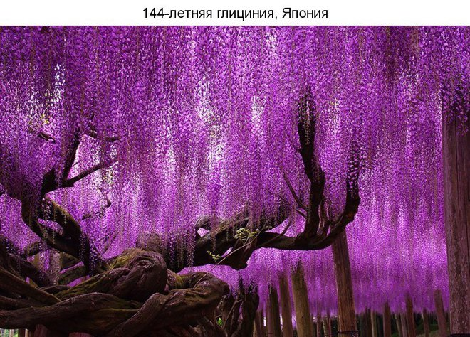 ТОП 10 самых красивых деревьев на планете
