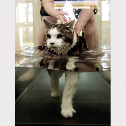 СПА-пытки для котов!!