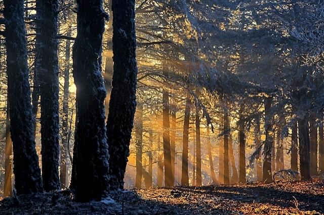 Чарівний ліс у Туреччині