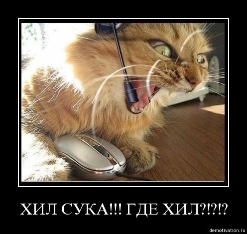 Кот - истеричка!