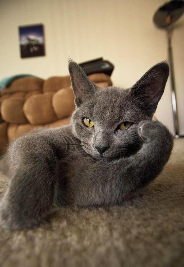 Котики - мастера позирования