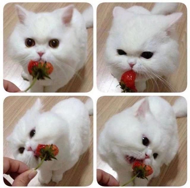 Няшный котик ест клубничку