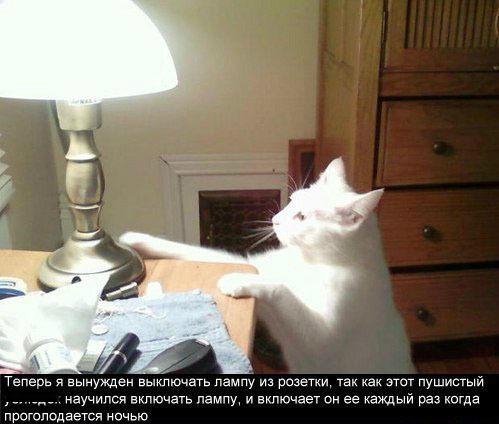 Смешной прикол про котэ и лампу
