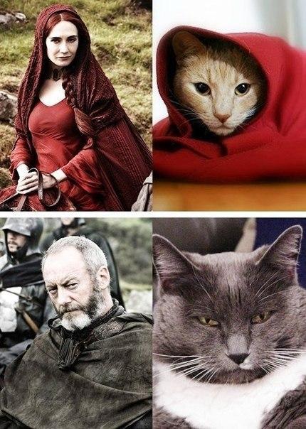 """Герои сериала """"Игры престолов"""" и котэ. Прикол"""