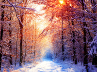 Утро в зимней лесу