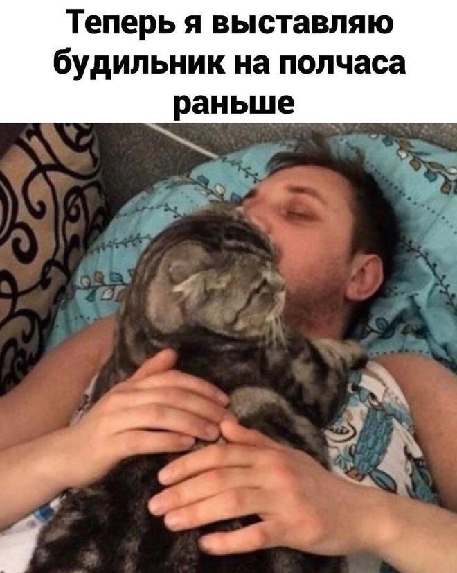 Котик и будильник