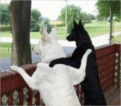 Собаки бро