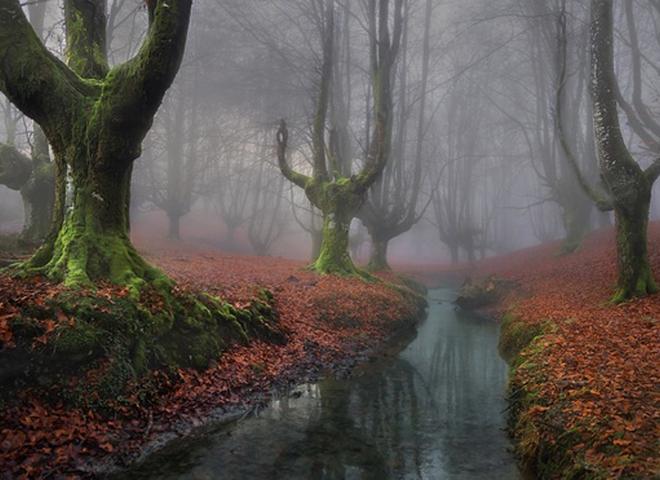 7 мистических лесов, от которых перехватит дыхание в 2016