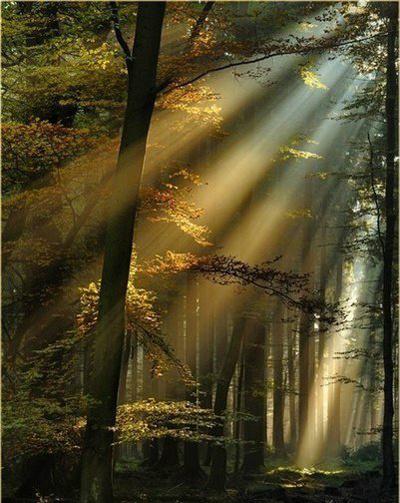 Солнечные лучи в утреннем лесу