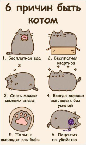 6 причин стать котэ