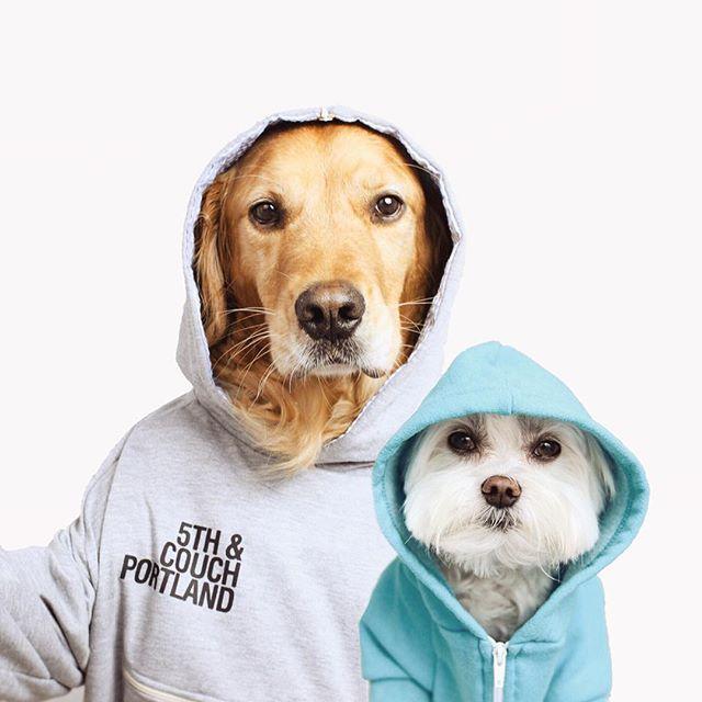 Пес Расті