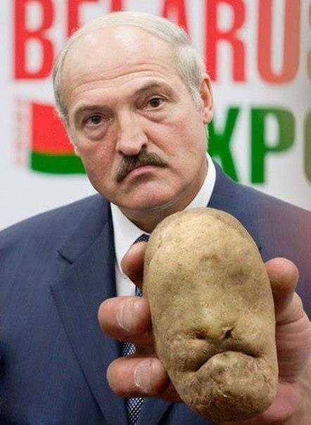 Лукашенко и его картошка