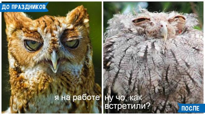 Жизнь до и после праздников
