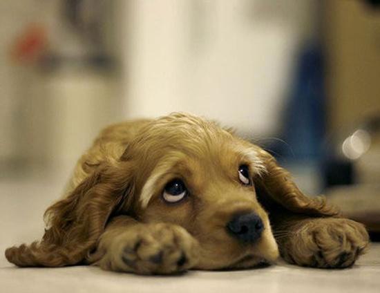 Виноватые собачки