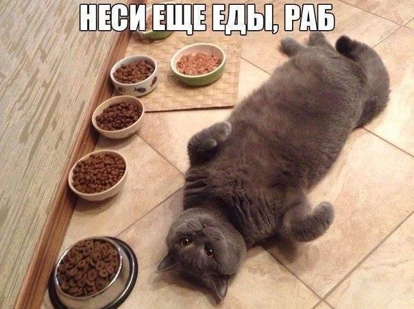 Неси еще еды, раб