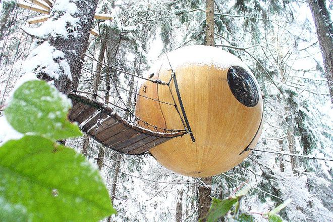 Провести ніч в гнізді: незвичайний готель на дереві