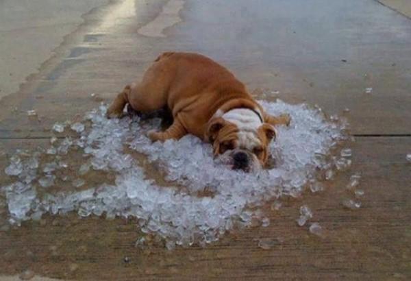 Песледние дни жаркого лета