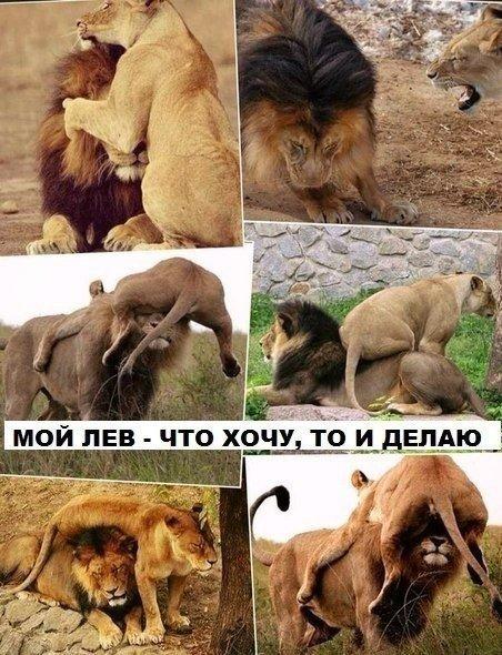 Мой лев - что хочу, то и делаю