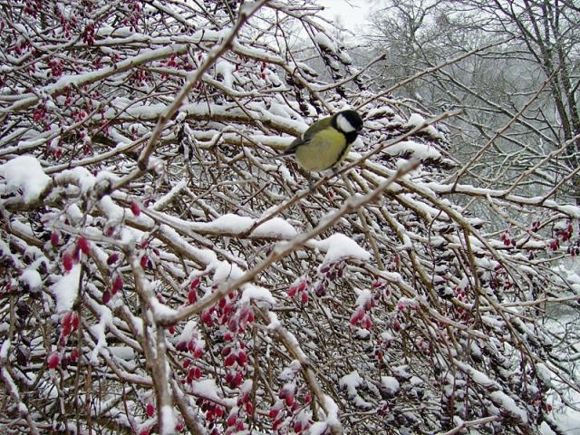 Софиевка зимняя