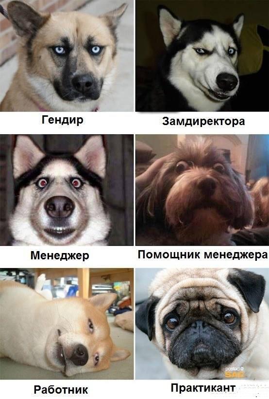 Собаки в офисе. Нереальная команда