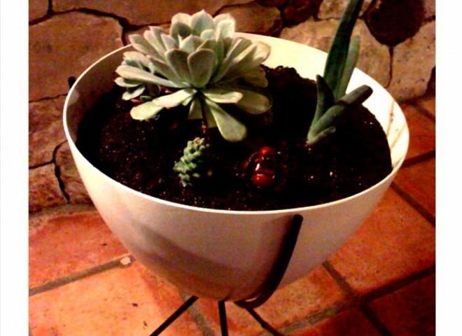 Комнатные растения с точки зрения фэн-шуй