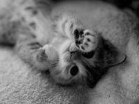 Котику