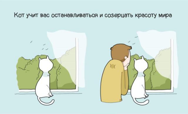 ТОП 10 причин иметь кота в доме
