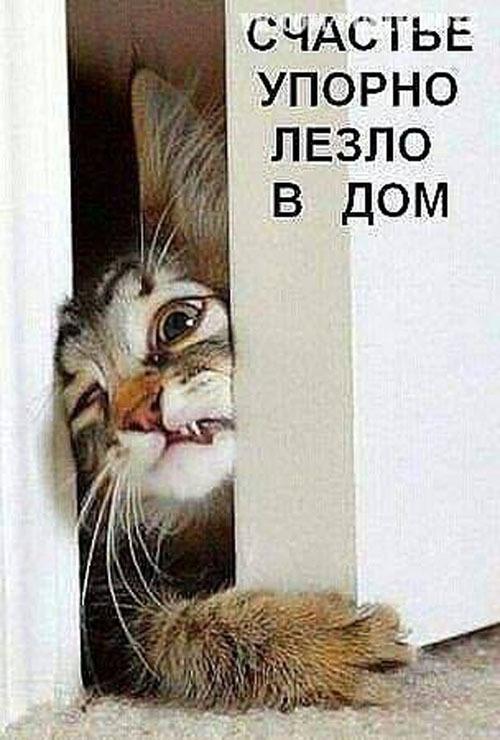 Открывай! Счастье в дверях застряло
