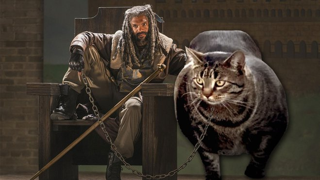 Buff Cat - новый герой интернета