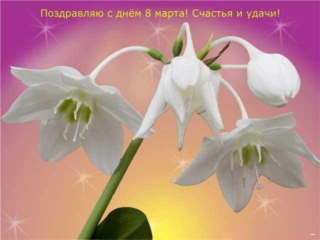 Открытка таня с 8 марта, телефона анимации картинки