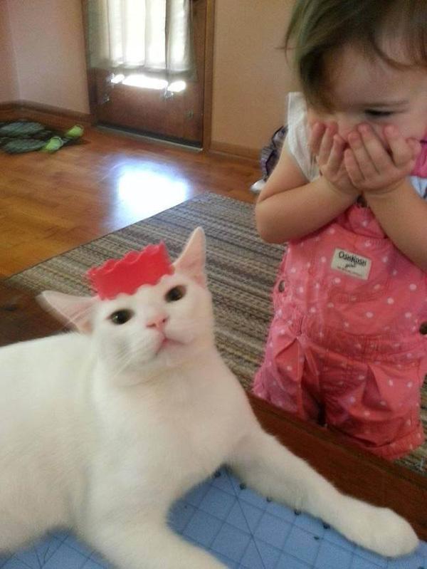 Коты - лучшие друзья