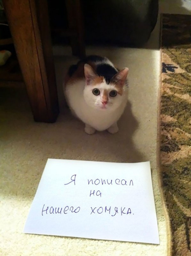 Чистосердечное призанание от котов-пакостников