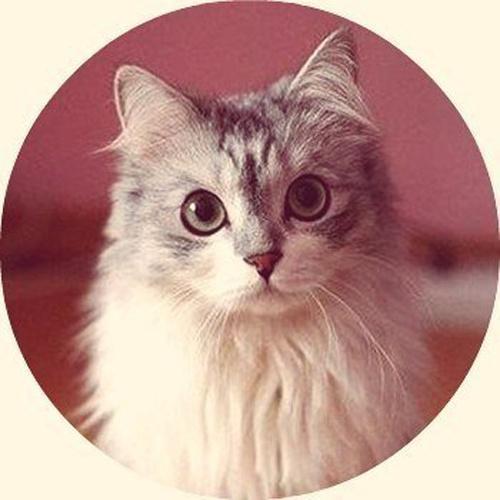 Милые котейки в кружочках