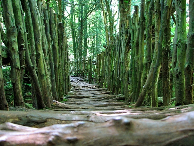 Пазлвуд - загадочный лес