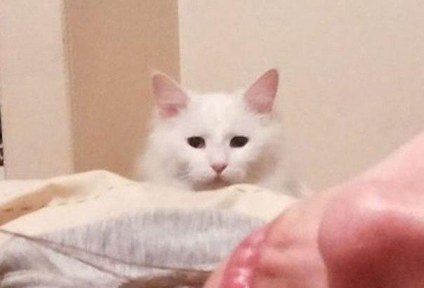 Самай несчастный белый кот